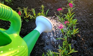 Image of water pail watering plants